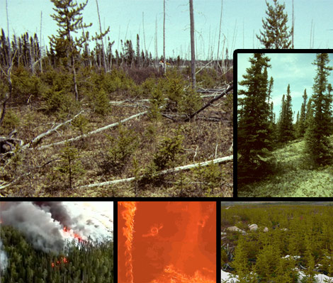 Photomontage of excerpts from the forest fire video, showing fires and forest regeneration