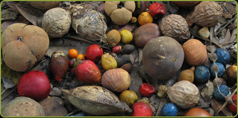 Photo of a coloured mix of tree fruits