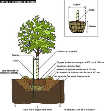 pin image planter un arbre dessin 21778 on pinterest. Black Bedroom Furniture Sets. Home Design Ideas