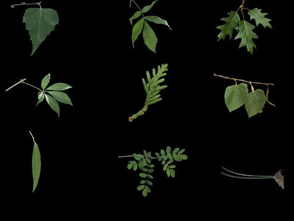 Photomontage of different tree leaves