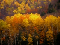Photo of a yellowish fall Quebec landscape