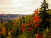 Photo of a fall landscape, with colours from green to bright red