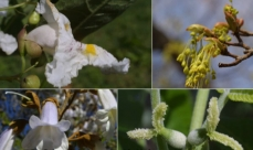 Photomontage showing the diversity of tree flowers