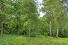 Photo of a forested landscape, in summer