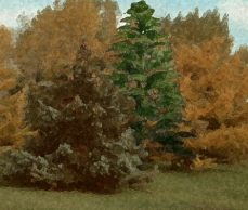 Drawing of Archaeopteris, the first modern tree, overlaid on top of a photo