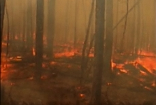 Photo of a forest fire, seen from the ground