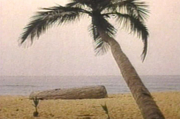 Photo of a coconut palm on a beach