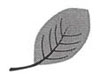 Drawing of an oval-shaped leaf